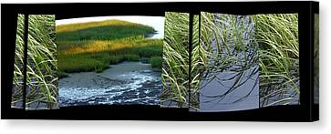 Seeing Seeing Canvas Print by Susie Capezzone