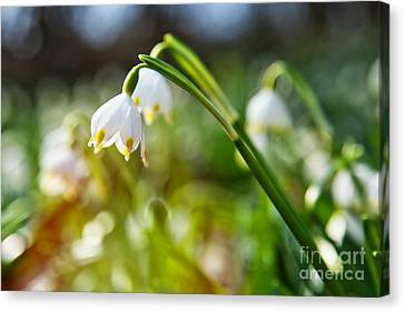 Canvas Print featuring the photograph Seeing The Sun by Christine Sponchia