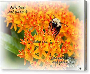Seek Peace  And Gather It Canvas Print by Sandra Clark