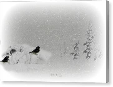 Seeking Shelter Canvas Print by Barbara S Nickerson