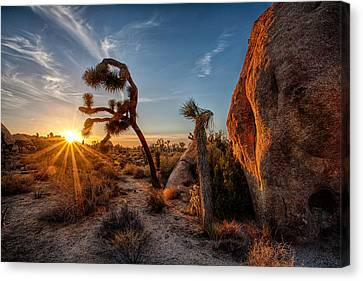 Seeking The Light Canvas Print by Peter Tellone