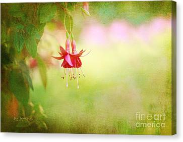 Seeking The Light Canvas Print by Beve Brown-Clark Photography