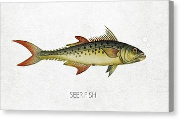 Seer Fish Canvas Print by Aged Pixel