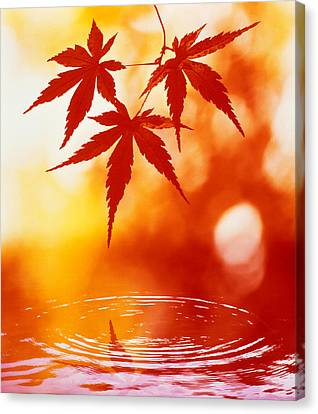 Selective Focus Of Red Leaves Canvas Print by Panoramic Images