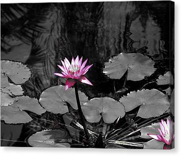 Selective Lily Canvas Print by Oscar Alvarez Jr
