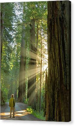 Self Portrait In God Rays Among Giant Canvas Print