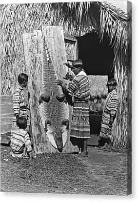 Seminole Dries Alligator Skin Canvas Print by Underwood Archives