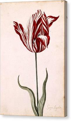 Semper Augustus Canvas Print