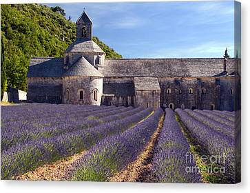 Senanque Abbey Canvas Print by Bob Phillips