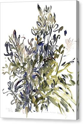 Senecio And Other Plants Canvas Print by Claudia Hutchins-Puechavy