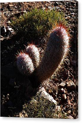 Senor Cacti Canvas Print