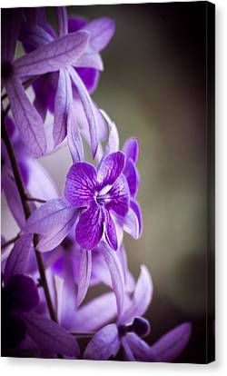 Sensational Purple Canvas Print by William Shevchuk