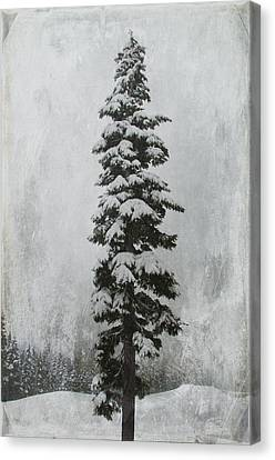 Sentinel Canvas Print by Marilyn Wilson