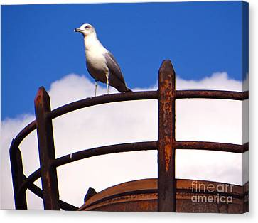 Canvas Print featuring the photograph Sentinel Sea Gull by Joy Hardee