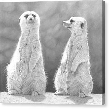 Meerkat Canvas Print - Sentinels by Laura Rohlfing