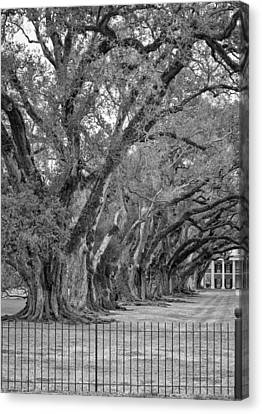 Sentinels Monochrome Canvas Print by Steve Harrington