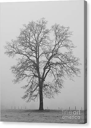 Sentry Oak Canvas Print