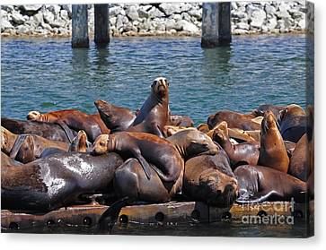 Sentry Sea Lion And Friends Canvas Print