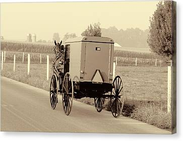 Sepia Amish Buggy Canvas Print by Dan Sproul