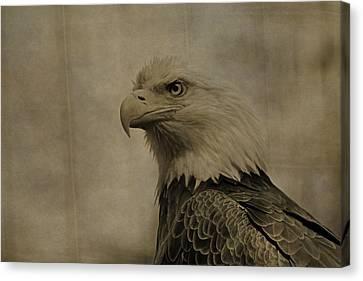 Eagle Canvas Print - Sepia Bald Eagle Portrait by Dan Sproul