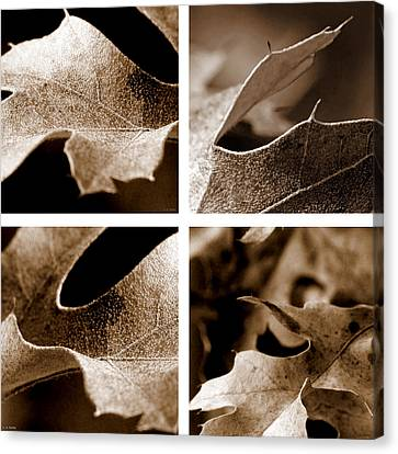 Canvas Print featuring the photograph Sepia Leaf Collage by Lauren Radke