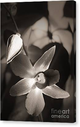 Canvas Print featuring the photograph Sepia Orchid by Ellen Cotton