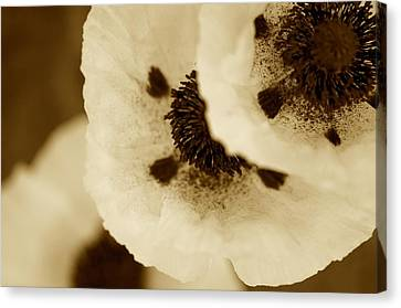 Sepia Poppies Canvas Print