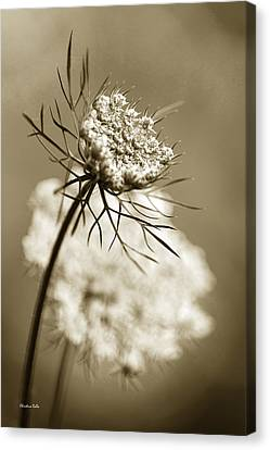 Sepia Wildflower Art Canvas Print by Christina Rollo