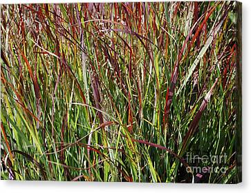 September Grasses By Jrr Canvas Print by First Star Art