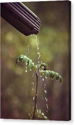 September In The Rain Canvas Print by Ari Salmela