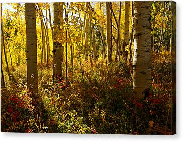 September Scene Canvas Print