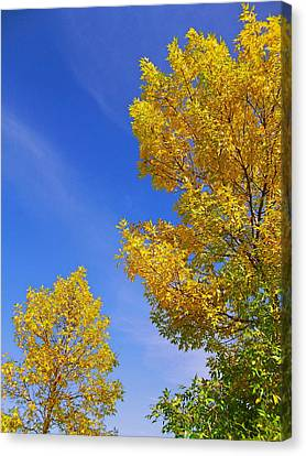 September Sky Canvas Print by Debi Dmytryshyn