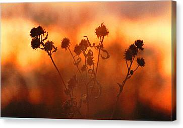 Canvas Print featuring the photograph September Sonlight by R Thomas Brass