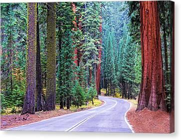 Sequoia Hwy Canvas Print