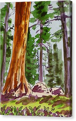 Sequoia Park - California Sketchbook Project  Canvas Print by Irina Sztukowski