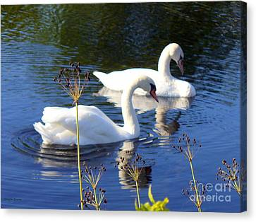 Canvas Print featuring the photograph Serenade Of  Love by Lingfai Leung