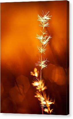 Canvas Print featuring the photograph Serene by Darryl Dalton