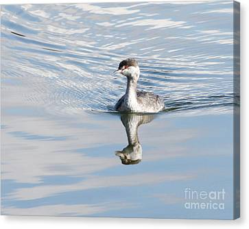 Canvas Print featuring the photograph Serene Grebe by Anita Oakley
