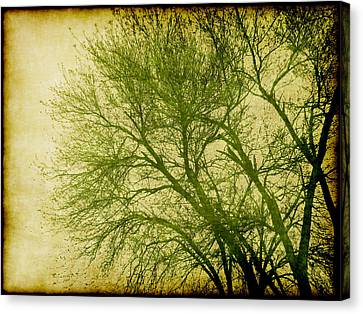 Serene Green 1 Canvas Print by Wendy J St Christopher
