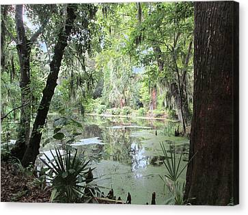 Serene Swamp Canvas Print by Silvie Kendall