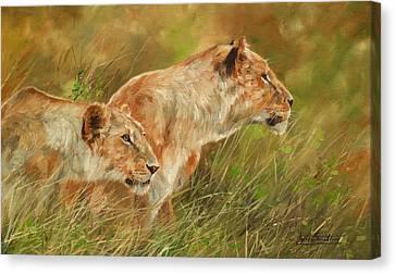 Serengeti Sisters Canvas Print by David Stribbling