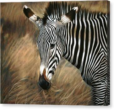 Serengeti Zebra Canvas Print by Carol McCarty