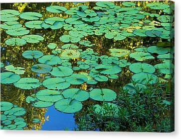 Canvas Print featuring the photograph Serenity Found - Green Lotus Leaves In Blue Water by Jane Eleanor Nicholas