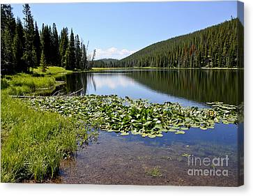 Serenity In Yellowstone Canvas Print by Teresa Zieba