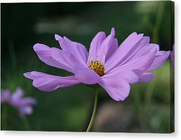 Serenity Canvas Print by Neal Eslinger