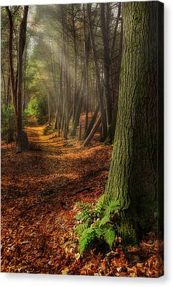 Serenity Of The Forest Canvas Print by Bill Wakeley