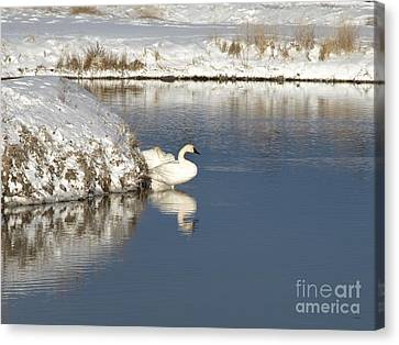 Serenity Canvas Print by Philip Bracco