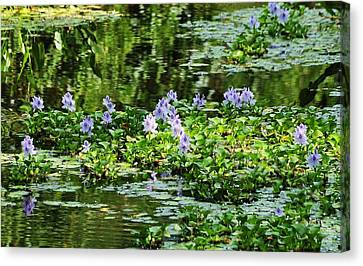 Serenity Unfolds Canvas Print by Kicking Bear  Productions
