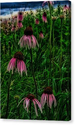 Canvas Print featuring the photograph Serious Coneflowers by Kimberleigh Ladd