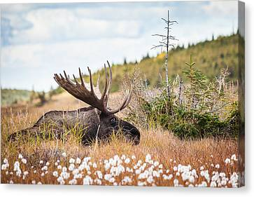 Canvas Print featuring the photograph Serious Lady-watching by Tim Newton
